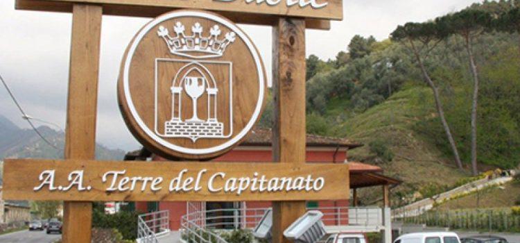 Cantine Basile – Terre Del Capitanato
